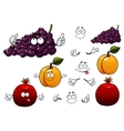 Grape apricot and pomegranate fruits vector image vector image