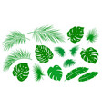 tropical set green palm leaf branch vector image