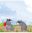two raccoons cute animals fighting for vector image