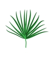 Green Palm Leaf on White Background vector image vector image