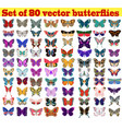 set summer butterflies on a white background vector image vector image