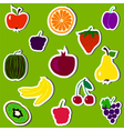 fruit and berries on green background vector image