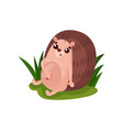 cute hedgehog sitting on the grass funny animal vector image vector image