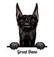 great dane - color peeking dogs - breed face head vector image vector image