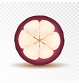 mangosteen half isolated on transparent background vector image