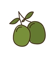 olive seeds isolated icon design vector image vector image
