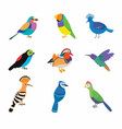 set most beautiful birds on planet vector image vector image