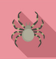 tarantum spider icon flat style vector image vector image