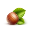 Full Unpeeled Hazelnut with Leaves Close up vector image vector image