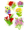 set of flowers on white vector image