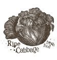 fresh cabbage logo design template fresh vector image vector image