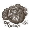 fresh cabbage logo design template fresh vector image vector image