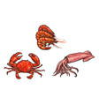 sketch lobster crab squid set isolated vector image vector image