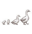 goose and duck farm animals sketch hand drawn vector image