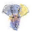 sketch by pen african elephant front view vector image vector image