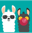 cute cartoon alpaca flat vector image vector image