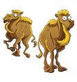 Funny Camel vector image vector image