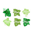 herbal tea with fresh mint logo templates set vector image