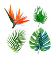 palm leaves flower bird of paradise strelitzia vector image vector image