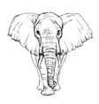 sketch pen african elephant front view vector image vector image