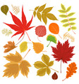 collection autumn leaves isolated on a white vector image