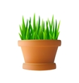 Fresh green grass in flowerpot vector image