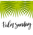 green palm leafs icon palm sunday text vector image vector image