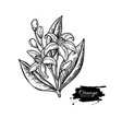 orange tree flower bloom drawing engraved vector image