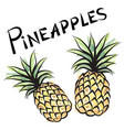 pineapple sign isolated fruit tag fresh farm vector image vector image