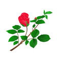 Rosebud red stem with leaves and blossoms vintage