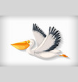 background template with plain color and pelican vector image vector image
