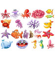 cute animal sea life in cartoon character vector image vector image