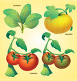 vegetables spinach squash tomato vector image vector image