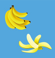 banana collection vector image vector image