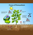 diagram showing process photosynthesis with vector image vector image