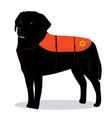 labrador retriever lifesaver outline vector image vector image