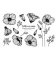 collection set of california poppy flower vector image vector image