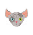 cute grey sphinx cat with eyes of different colors vector image vector image