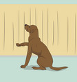 dog sitting in a room vector image vector image