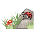 ladybug corner design vector image