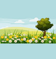 spring beautiful scenery fields chamomile vector image