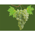 Summer autumn grapes postcard vector image vector image