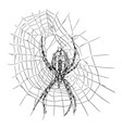 hand drawing of wasp spider on net vector image vector image