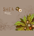 background with shea nuts and branch vector image vector image
