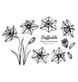 collection set of daffodils flower and leaves vector image vector image