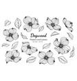 collection set of dogwood flower and leaves vector image vector image