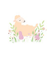 cute little lamb lying on spring meadow adorable vector image vector image