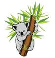 koala vector image vector image