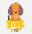 pet shop little dog sitting bone veterinary vector image vector image