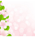 Apple Tree Flowers With Bokeh vector image vector image